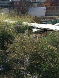 14 High Line